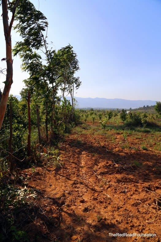 The rich soil and the boundary line of the property