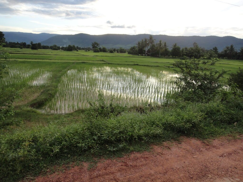 Rainy Season Rice Fields in Cambodia